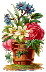 Tin Teddy Language of Flowers Part 1