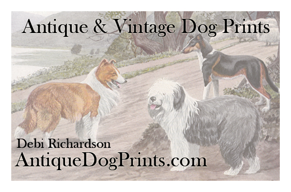 AntiqueDogPrintsCard